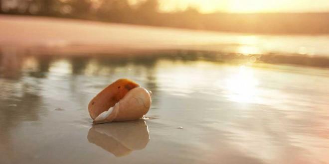 Muscheln bestimmten: der Schmuck unserer Strände