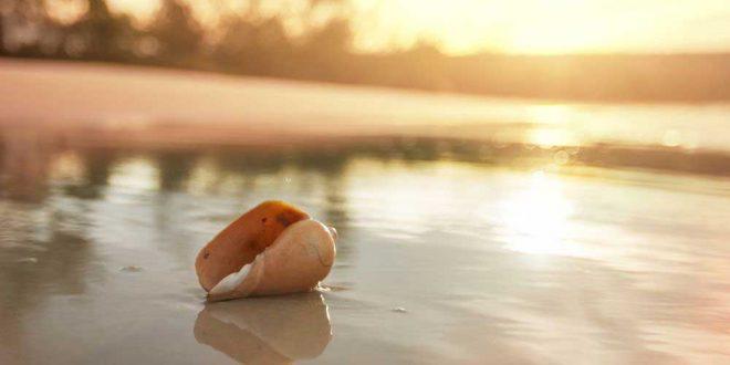 Muscheln bestimmen: der Schmuck unserer Strände