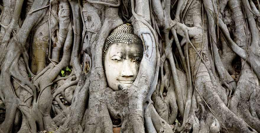 Buddha im Baum eingewachsen in Ayuttaya