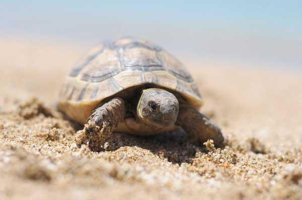 Schildkröten an der Türkischen Riviera