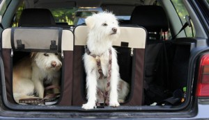 Hunde sicher transportieren