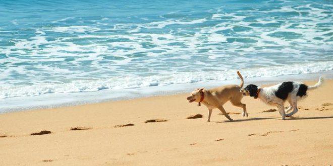 Mit dem hund in den urlaub 5vorflug blog for Urlaub auf juist mit hund