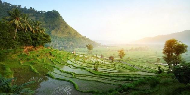 Exotisch, idyllisch, wunderschön - das ist Bali