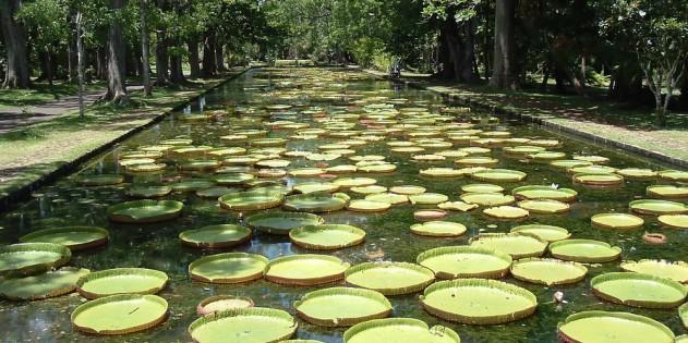 Pampelmousee Garden - Mauritius' traumhafte Gartenanlage