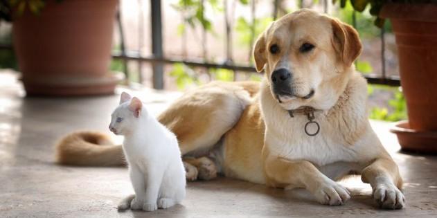 Hund und Katze mitten im Urlaub