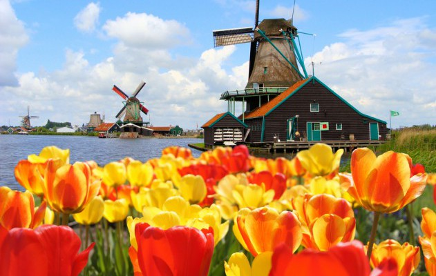 Blühende Tulpen in Holland