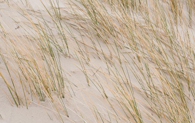 Sand auf Amrum
