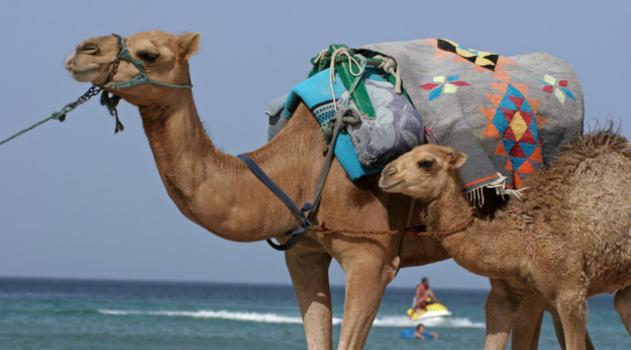 Dromeda Tunesien