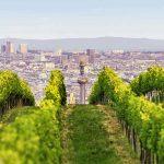 Panorama über Wien mit Weinstöcken