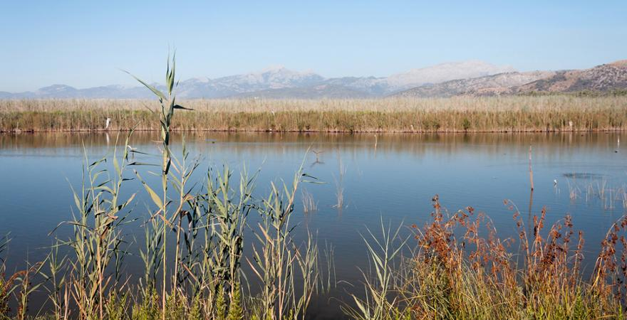 Nationalpark S'Albufera