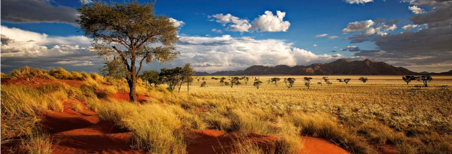 namibia steppe