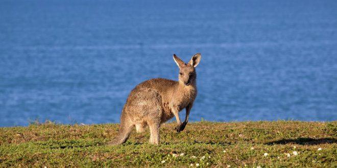 Australien: Urlaub am anderen Ende der Welt