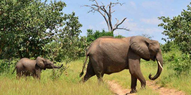 Impfungen und medizinische Hinweise für Urlaub in Südafrika