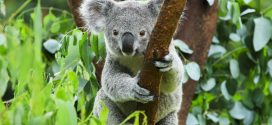 Tierisch unterwegs – Die ultimative Reise-Bucketlist für Tierliebhaber