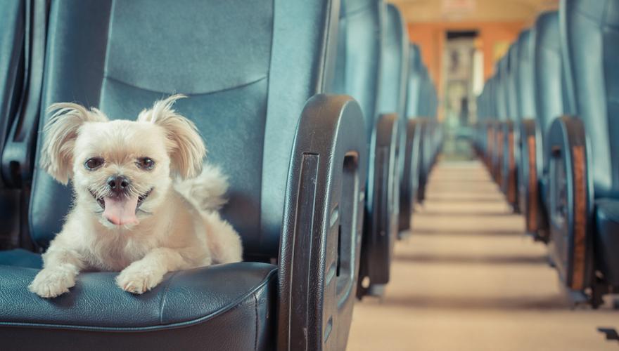 Hund in der Bahn