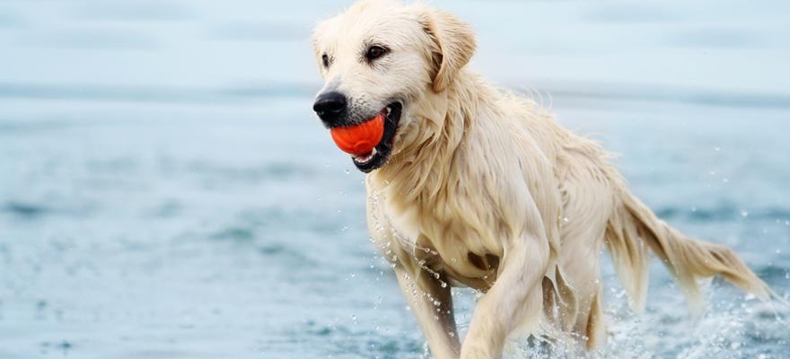 Spielender Hund im Wasser