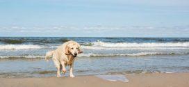 Mit dem Hund an die Ostsee: Unsere Reisetipps