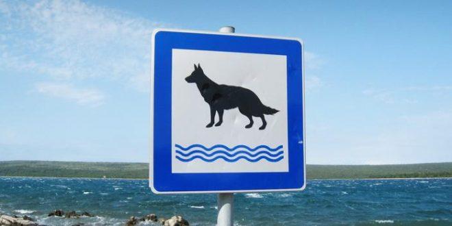 Mit dem Hund nach Krotaien: Unsere Reisetipps