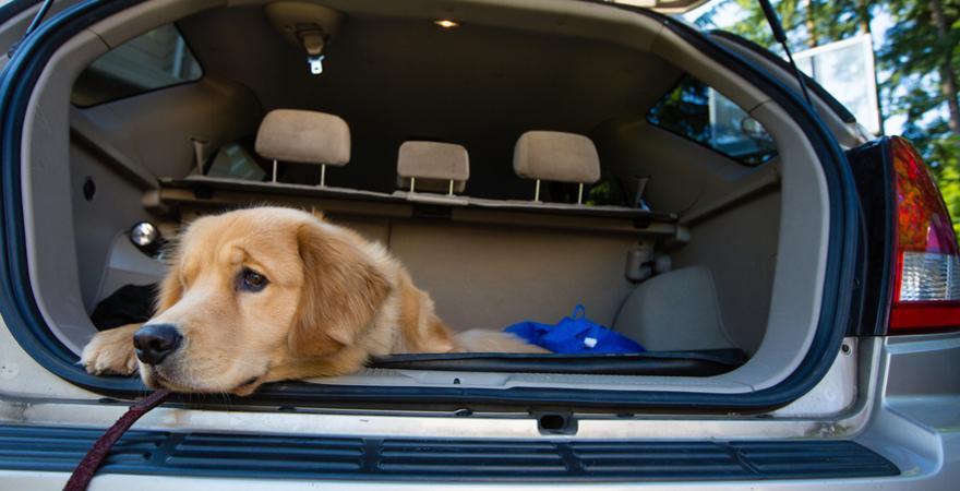 Anreise mit Hund