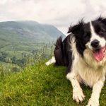 Urlaub in Oesterreich mit Hund