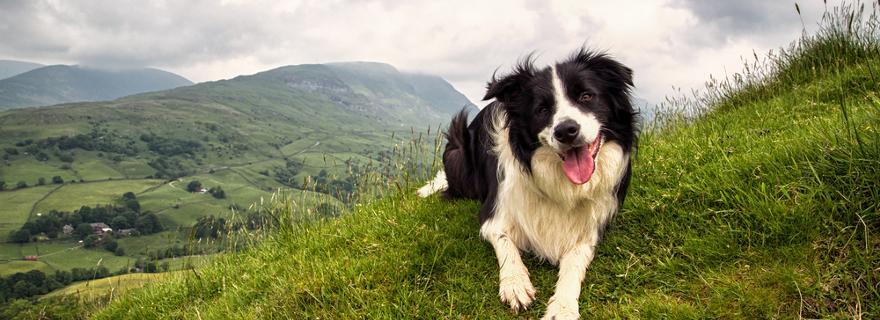 Urlaub mit Hund: Reisetipps für Österreich