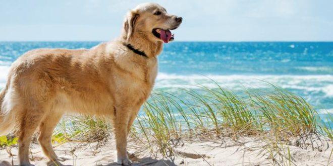 Wenn der Hund mit in den Holland Urlaub kommt – Reisetipps