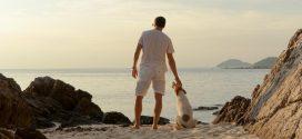 Mit dem Hund nach Italien: Unsere Reisetipps