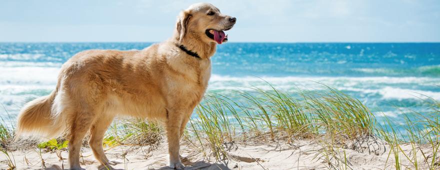 Urlaub mit Hund in Holland