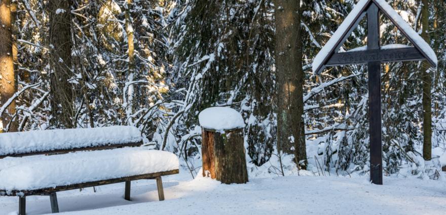 Winter Nationalpark Eifel