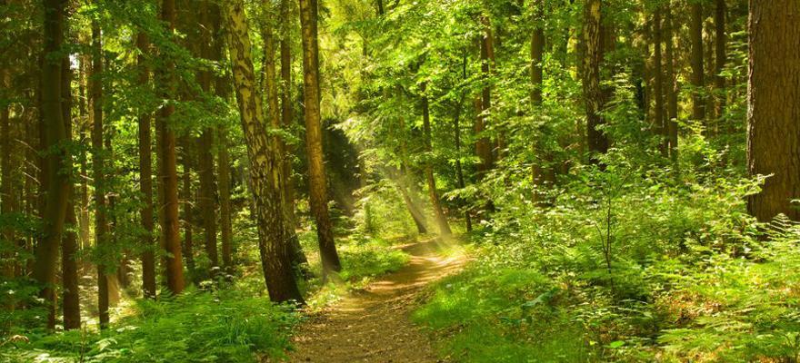 Waldabschnitt Deutschland