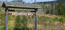 Einen Urlaub wert: Der Nationalpark Bayerischer Wald
