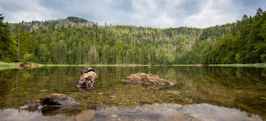 Rachelsee bayerischer Wald