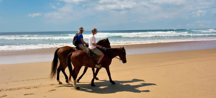 Pferd Strand Meer