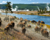 tierwelt yellowstone nationalpark