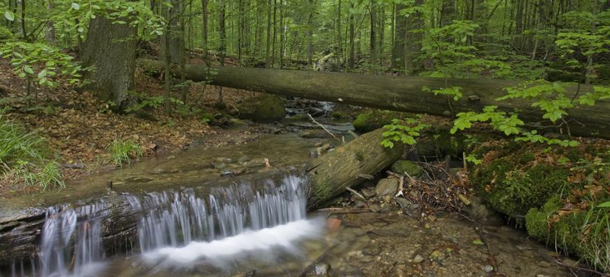 urlaub im Bayerischer Wald