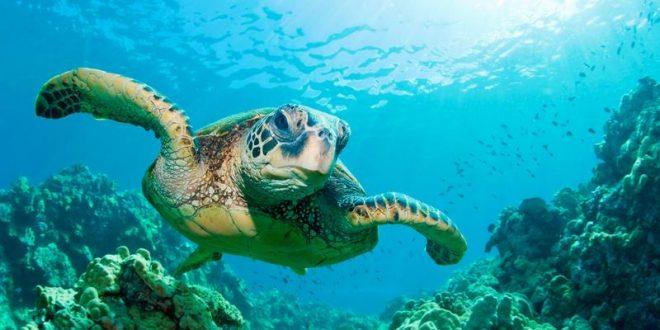 Tauchen auf Bali: Die besten Tipps & Hotspots für euren Tauchurlaub auf der Insel der Götter