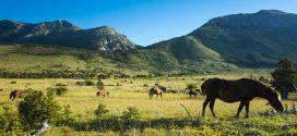 Auf in die Wildnis: Die schönsten Nationalparks in Kroatien