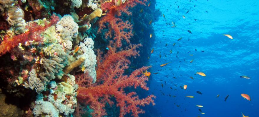 Unterwasserwelt Marsa Alam