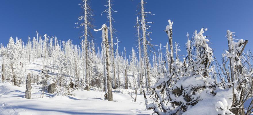 bayerischer wald winter
