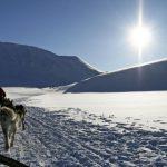 Fahrt mit dem Hundeschlitten in Norwegen