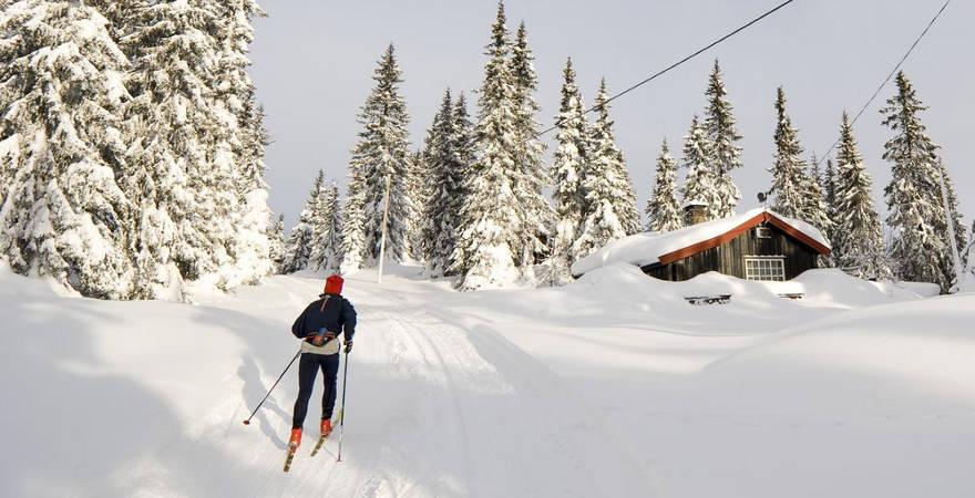 Langlauf im Wald in Tschechien