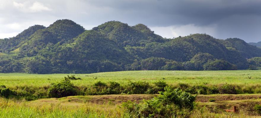 Hügel Regenwald Jamaika