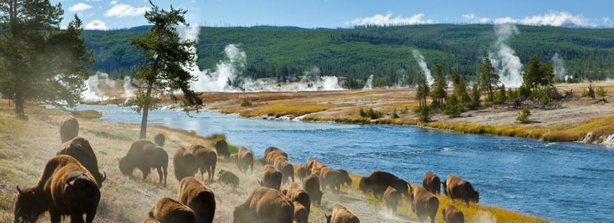Einzigartige Natur und Megametropolen: USA Reisetipps