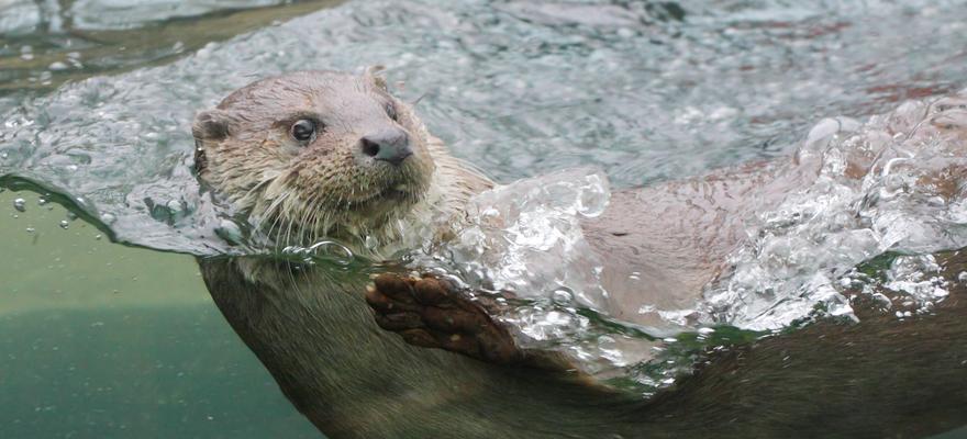 otter wasser