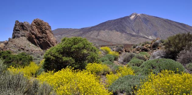 Unser Tipp für Wanderurlaub: Tenerife Walking Festival 2020