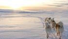 Schlittenhunde in isländischer Schneelandschaft