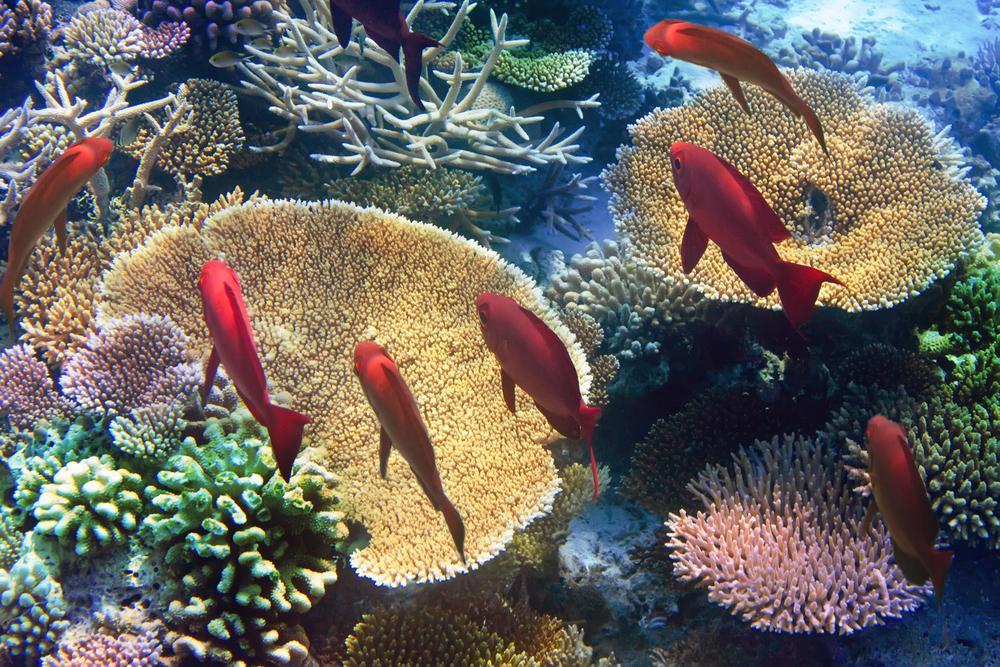 Mauritius-Unterwasserwelt