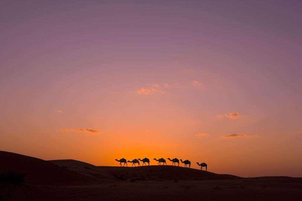 Oman-sonnenuntergang-kamele