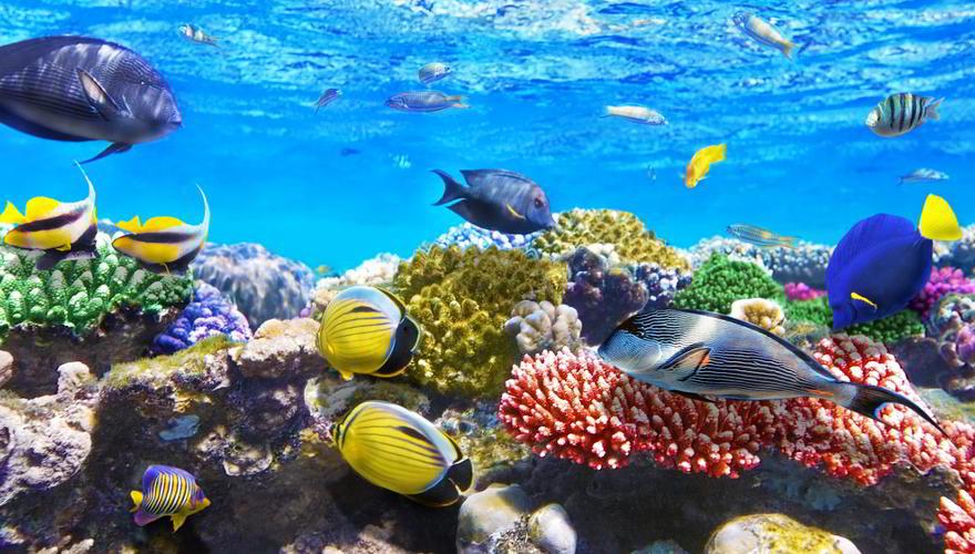 Buntes Riff mit Fischen in Ägypten