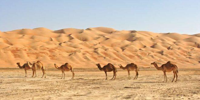 Abu Dhabi – Die 6 besten Ausflüge